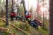 Hjärsås Skogsentreprenad AB